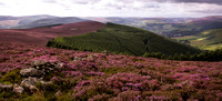 Looking over the old reservoir from Priesthope. Heather in full bloom