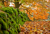Moss covered dyke and autumn colours